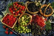 Продажа ягод,  овощей,  фруктов.Оптом и в розницу.